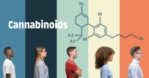 The Endocannabinoid System Explained
